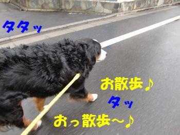 粉雪お散歩~♪