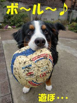 ボールで遊ぶの~!!