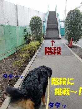 階段上れるもん~!