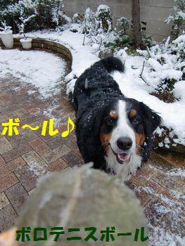 雪のボール遊びも楽しい~♪