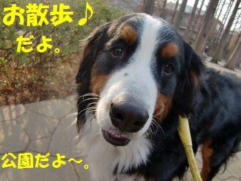 お散歩来ました~!!