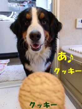 クッキー好き~~!