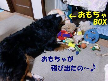 おもちゃが出たんだも~ん♪