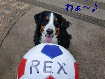 僕のボールなの~!?