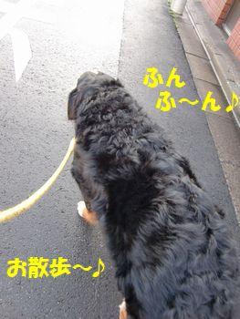お散歩、お散歩~♪
