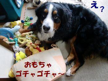 おもちゃで遊んでるだけだよ~?