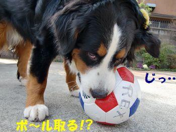 僕のボール取る気?