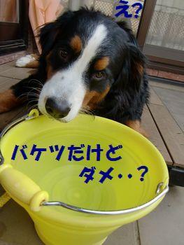 バケツ水はおいしいよ?