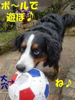 んじゃ!ボールで遊ぼ!