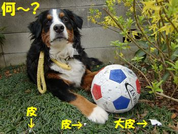 僕のボールが何か~!?