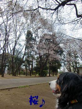 咲いてる~♪
