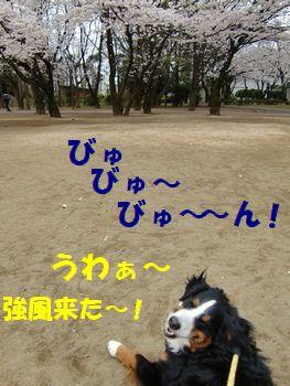 強風来た~!!