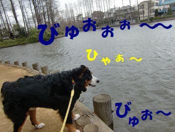 風強っ!!