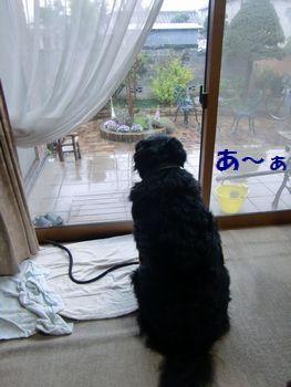 あ~あ、濡れてるし~。