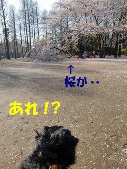 桜なんか変!?