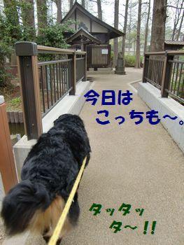 橋渡る~♪