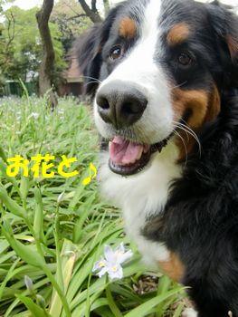 なんて名前のお花~?