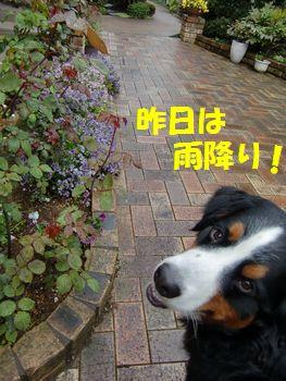 雨で地面がじめじめ~!