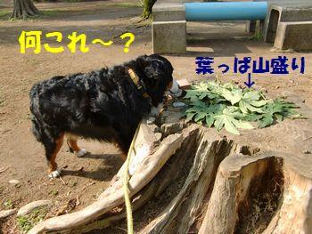 葉っぱが山盛り~!?