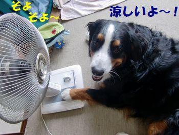 とっても涼しいの~!