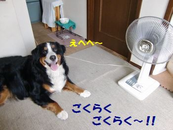 扇風機好き~!!