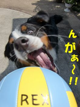 じゃ~さっそく~!!!
