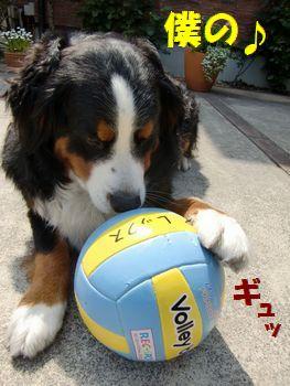 僕の新しいボール♪