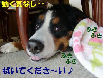 動く気しな~い!!