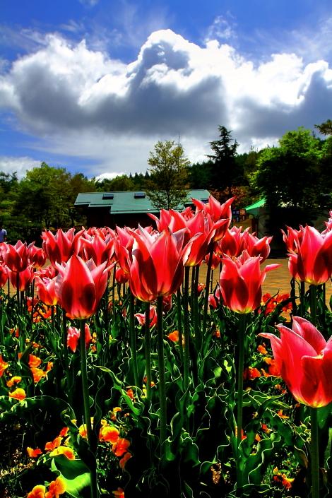 山中湖 植物園 3