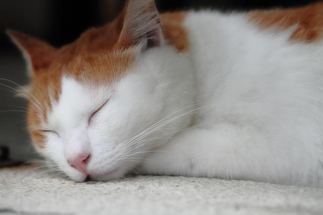 眠り猫のコピー2