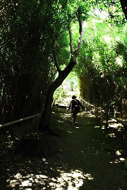 参詣縁 木漏れ日
