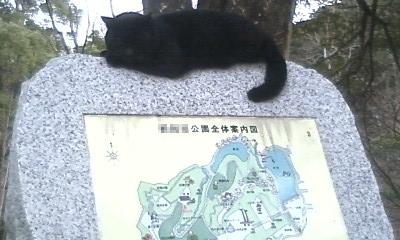 黒ネコさん