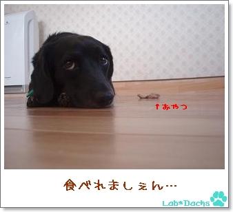 l-d04_20090907175324.jpg