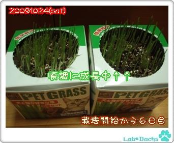 20091024sat/草