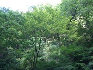 滝のそば-2