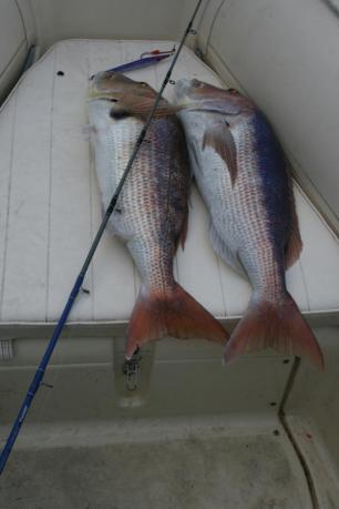 f2真鯛2匹