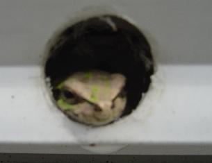 雨蛙のケロちゃん