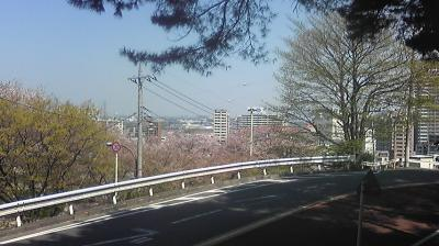 Image101sakura.jpg
