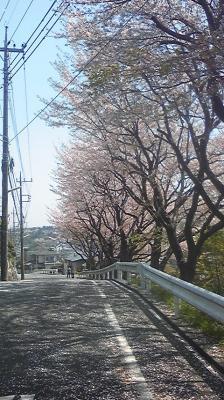 Image103sakura.jpg