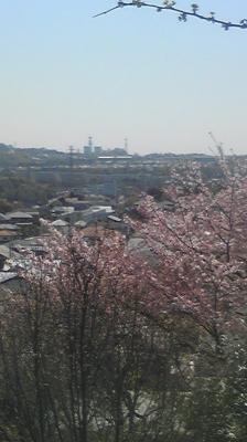 Image104sakura.jpg