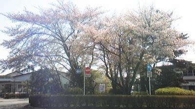 Image107sakura.jpg