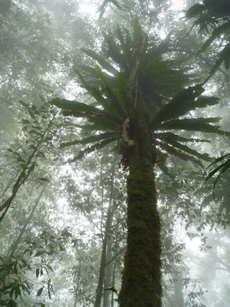 木 その2