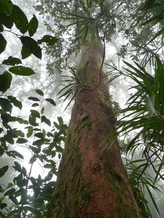 木 その3