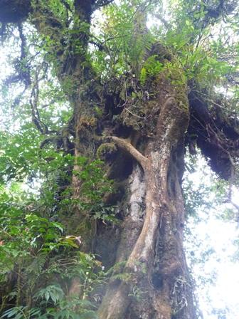登山道わきの木