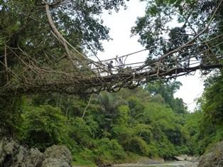木を利用した橋