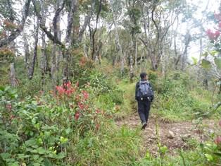 赤い葉先が綺麗な森を通る