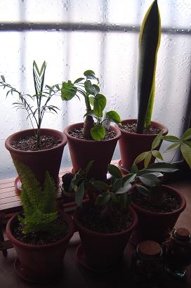 12/30 室内の植物