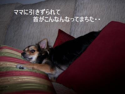 100_2956.jpg