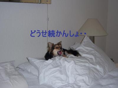 100_31281.jpg