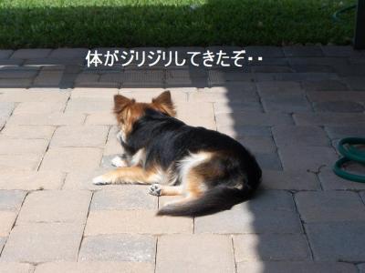 100_3455.jpg